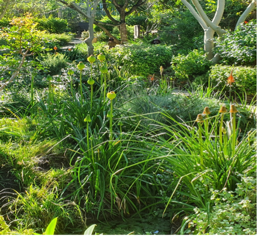 A domestic landscape featuring mainly endemic planting