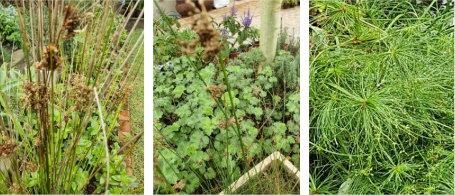 grasses collage 2
